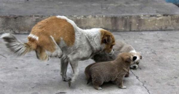Δύναμη ζωής: Ίσως η γενναιότερη γάτα-μάνα που έχετε δει (εικόνες)