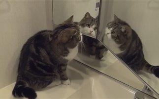 Ξεκαρδιστικό βίντεο: Γάτες αντικρίζουν το είδωλο τους
