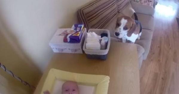 Απίστευτο βίντεο: Σκύλος βοηθάει τη μαμά να αλλάξει την πάνα του μωρού!