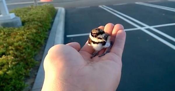 Σώζει αυτό το μικρό αυτό πουλί αλλά αυτό που έγινε το είχε φανταστεί ποτέ! (Βίντεο)