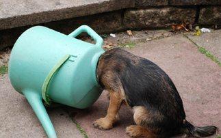 Σκυλοκαταστάσεις για τρελά γέλια! (εικόνες)
