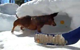 Ξεκαρδιστικό βίντεο: Ο σκύλος που παίζει χόκεϊ