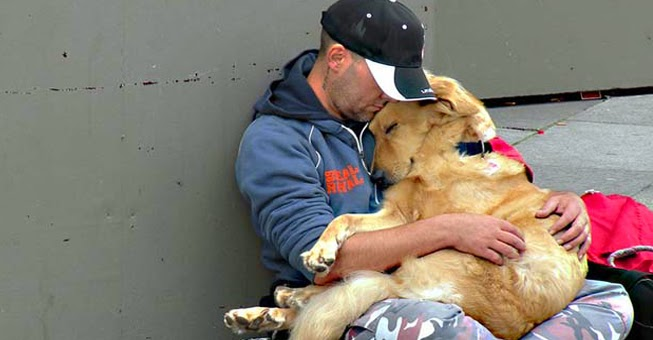 Σκύλος άστεγοι