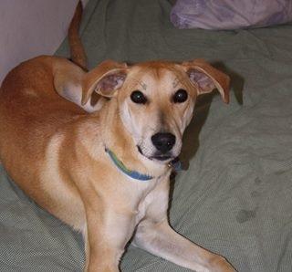 Χαρίζεται σκυλίτσα 9 μηνών