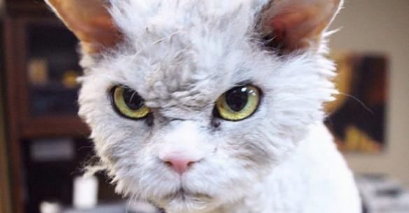 Η γάτα με το πιο »σατανικό» βλέμμα που κάνει το γύρο του ίντερνετ (εικόνες)