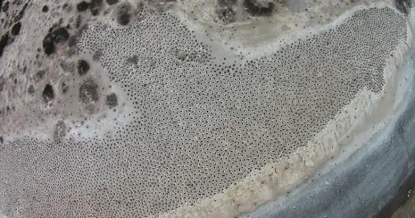 Με τι σας μοιάζουν αυτές οι κουκίδες σε παραλία της Αργεντινής;