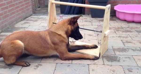 Κρατήσετε το σκύλο σας απασχολημένο για ώρες με αυτό το απλό κολπάκι (βίντεο)