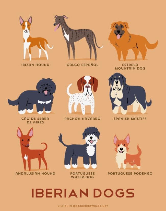 Σκύλος σκυλιά ράτσες Εικόνες γεωγραφική προέλευση