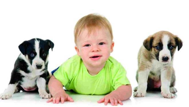 Σκύλος παιδί μωρό