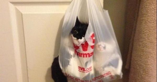 15 γάτες που μάλλον μετάνιωσαν για τις επιλογές τους (εικόνες)