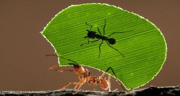 Παπαγάλοι χορεύουν και μυρμήγκια κάνουν άρση βαρών! Δείτε απίστευτες φωτογραφίες του ζωϊκού βασιλείου, από απόσταση αναπνοής!