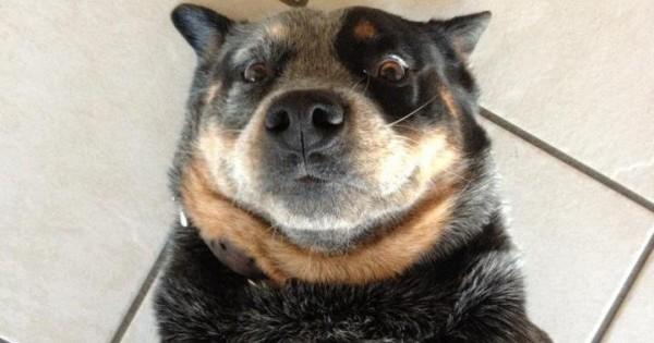 22 εντυπωσιακές selfies σκύλων!