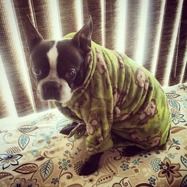 Σκύλος σκυλάκια πυτζάμες κουταβάκια
