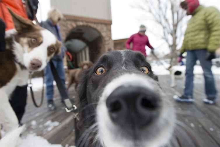 σκύλοι selfie