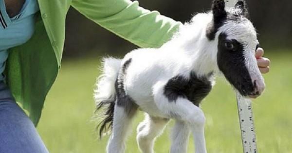 30 ακαταμάχητα μωρά ζώων που θα σας φτιάξουν τη διάθεση! (εικόνες)