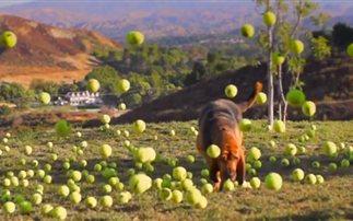 Αυτός είναι ο παράδεισος των σκύλων (βίντεο)