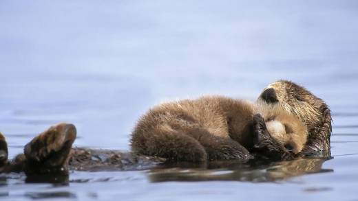 φωτογραφίες ζωϊκό βασίλειο ζώα