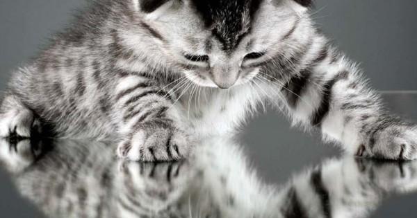 Καθρέφτη, καθρεφτάκι μου, ποια… γάτα είναι πιο όμορφη; (video)