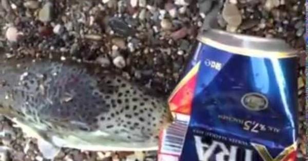 Μεγάλη προσοχή: Αυτό το ελληνικό ψάρι μπορεί να σε… σκοτώσει αν βρεθεί στο πιάτο σου (βίντεο)