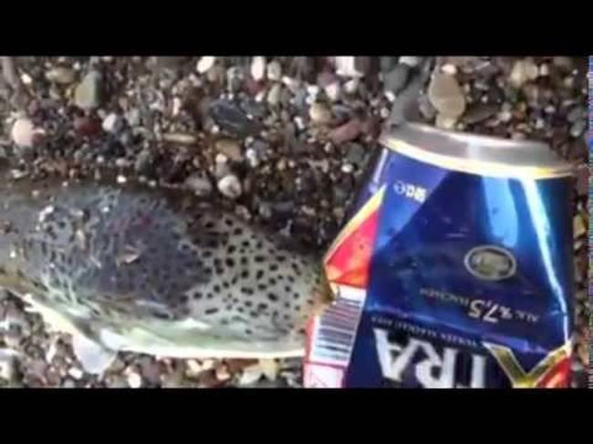 ψάρι λαγοκέφαλος Βίντεο