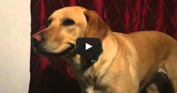 Ο σκύλος που χαμογελά στην κάμερα! (video)