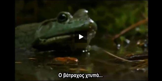 Σαλαμάνδρα Βάτραχος