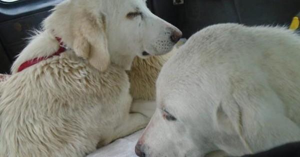 Με σπασμένες επιγονατίδες τα 3 σκυλιά που εγκαταλείφθηκαν στο Κάτω Σχολάρι Θεσσαλονίκης (εικόνες)