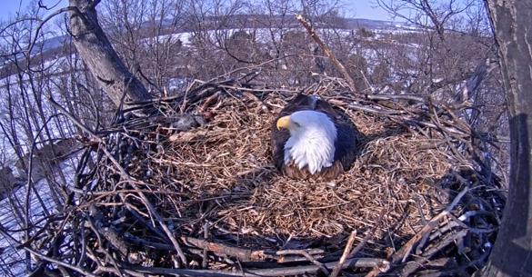 Δείτε τι κατέγραψε μια κάμερα στην φωλιά ενός αετού (βίντεο)