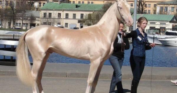 Τα 10 ομορφότερα άλογα που είδατε ποτέ! (εικόνες)