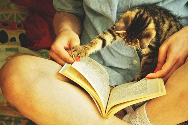 Εικόνες γάτες αφεντικά