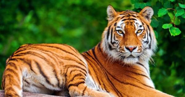 Δείτε τα 10 πιο δυνατά ζώα στον πλανήτη (εικόνες)
