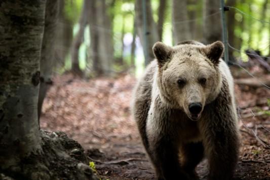 χειμερία νάρκη αρκούδες