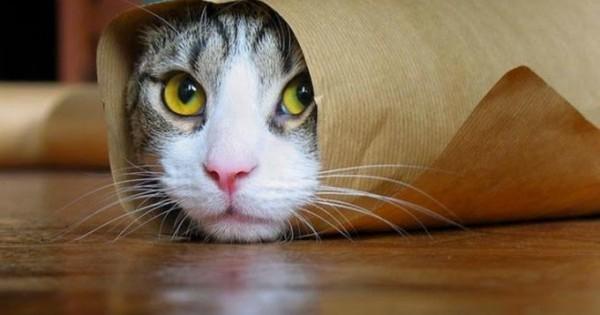 12 αποδείξεις ότι η γάτα σου δεν είναι και τόσο… έξυπνη