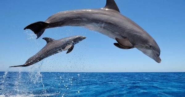Δέκα χαριτωμένα ζώα που μπορούν να σε… σκοτώσουν (βίντεο)