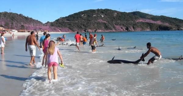 30 κακόμοιρα δελφίνια ξεβράστηκαν στην ακτή – Δείτε όμως τι έγινε ύστερα (βίντεο)