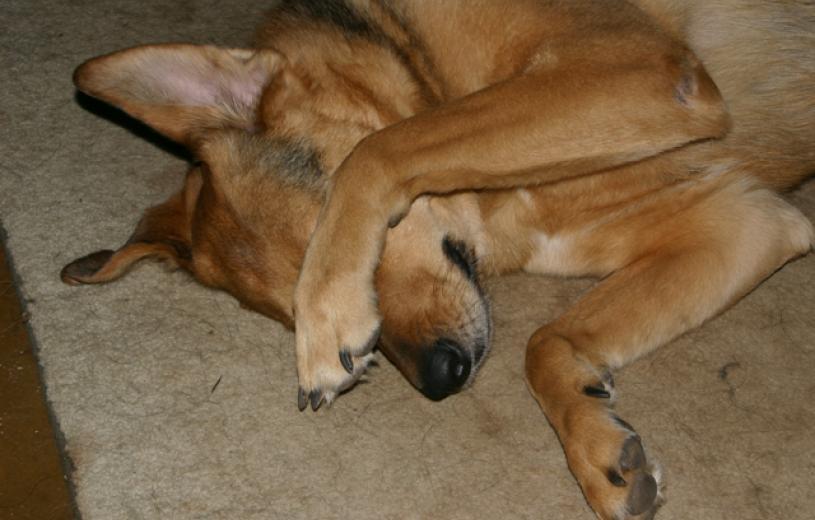 dog_life_0