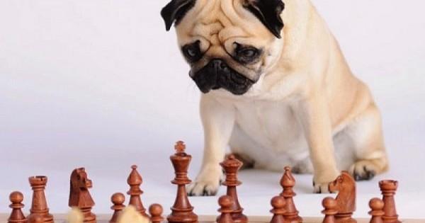 ΤΕΣΤ: 10 τρόποι για να προσδιορίσετε το IQ του σκύλου σας