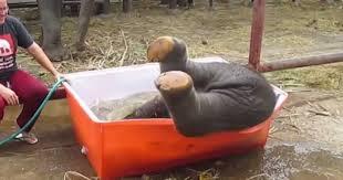 Αυτός ο μόλις 1 εβδομάδας ελέφαντας δεν μπορεί να κάνει μπάνιο με τίποτα! Το αποτέλεσμα; Ανεκτίμητο!
