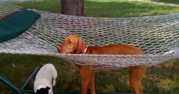 Πολύ γέλιο: 20 σκύλοι που σίγουρα μετάνιωσαν για την επιλογή τους (εικόνες)