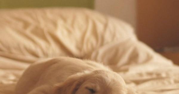 Συμβουλές για να απαλλαγείτε από τις τρίχες του σκύλου σας άμεσα!