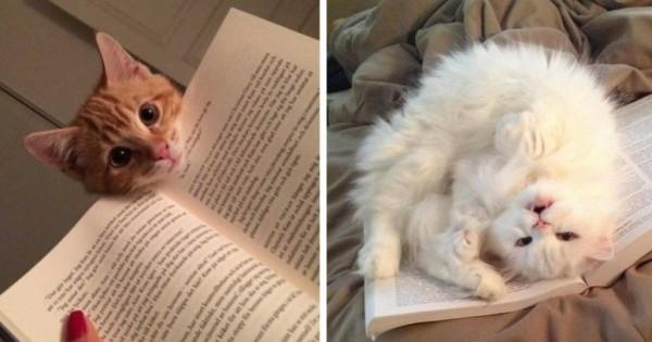 20 άτακτες γάτες που δεν αφήνουν με τίποτα τα αφεντικά τους να διαβάσουν! (εικόνες)