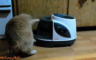Πολύ γέλιο: Οι γάτες εναντίον του υγραντήρα (βίντεο)
