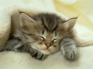 Αδέσποτη γάτα κάνει μασάζ στην καρδιά της τραυματισμένης «φίλης» της (βίντεο)