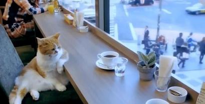Αυτό τον γάτο τον έστησαν και δεν του άρεσε… (βίντεο)