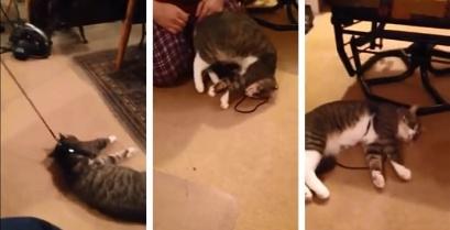Δεν υπάρχει: Γάτα το παίζει νεκρή για να αποφύγει τη βόλτα (βίντεο)