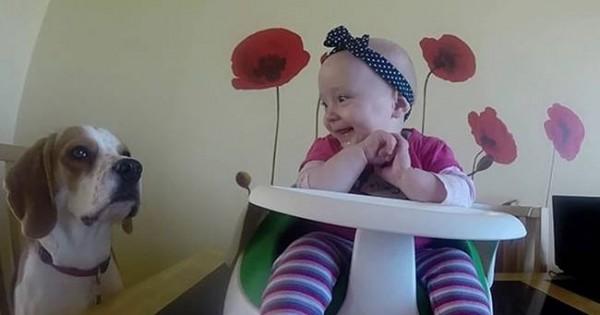 Charlie το Beagle: Η πιο γλυκιά babysitter στον κόσμο (βίντεο)