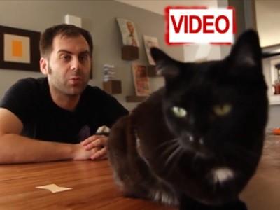 8 πράγματα που θα αλλάξει στη ζωή σας… μια γάτα! (video)
