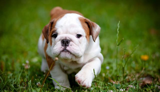 Σκύλος κουτάβι άσκηση