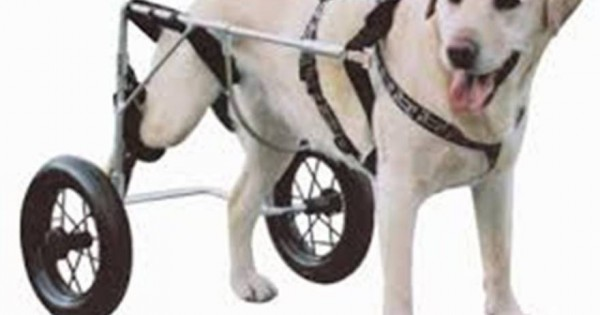 Σέρβος προγραμματιστής κατασκευάζει αναπηρικά καροτσάκια για κατοικίδια