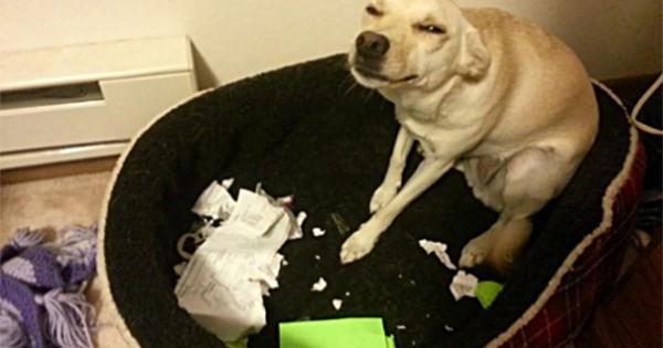 Στιγμές που οι σκύλοι μας μας κάνουν τη ζωή «κόλαση»! (εικόνες)